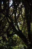 New Zealand Bush. A look into the new zealand bush Royalty Free Stock Photography
