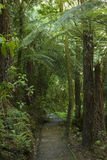 New Zealand bush Stock Photo