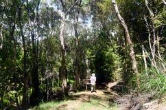 New Zealand bush Royalty Free Stock Photo