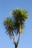 New Zealand cabbage tree. New Zealand native cabbage tree (Cordyline australis) against a beautiful blue sky stock photo