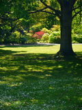 New Zealand: Christchurch botanic gardens trees and shrubs Stock Photography