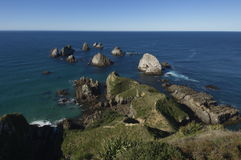 New Zealand coast line. A rugged coast line in New Zealand Royalty Free Stock Images