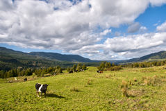 New Zealand Countryside Stock Photos