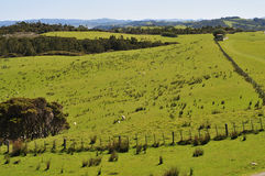 New Zealand Countryside Royalty Free Stock Photo
