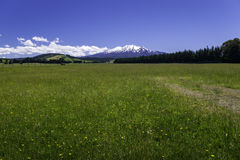 New Zealand Countryside Ohakune. A wide angle view of New Zealand countryside near the town of Ohakune. You can see the snow covered peaks of Mount Ruapehu in stock photography