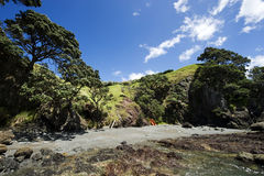New Zealand Cove Royalty Free Stock Images
