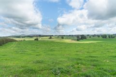 New Zealand Dairy Farm Landscape Stock Image