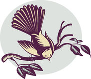 New Zealand fantail bird stock illustration