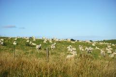 New Zealand farmland Royalty Free Stock Photos