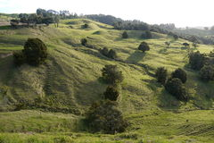 New Zealand: farmland landscape - h Royalty Free Stock Image