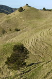New Zealand: farmland landscape with hill - v Stock Image