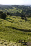 New Zealand: farmland landscape - v Royalty Free Stock Photography