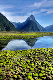 New Zealand Fiordland at the Milford Sound Royalty Free Stock Photo