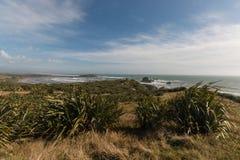 New Zealand flax Stock Image