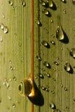 New Zealand Flax Leaf 03 royalty free stock photo