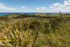New Zealand flax on rolling hills Stock Photography