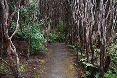 New Zealand forest Stock Photo