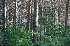 New Zealand forest scene Royalty Free Stock Photography