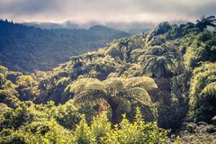Free New Zealand Forest View Royalty Free Stock Photos - 157065638