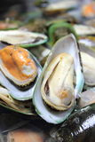 New Zealand Fresh mussels for sale Royalty Free Stock Photography