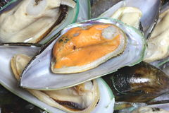 New Zealand Fresh mussels for sale Stock Photo