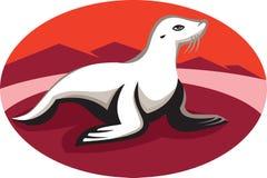 New Zealand Fur Seal Retro Royalty Free Stock Image