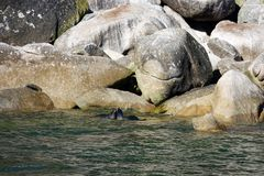 Seals in Abel Tasman National Park, New Zealand stock image