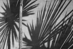 New Zealand: garden native plant shadow wall Royalty Free Stock Photo