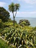 New Zealand: garden with native plants Royalty Free Stock Photos