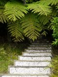 New Zealand: garden steps ferns stock photography