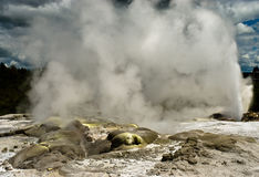 New Zealand Geyser Stock Photography