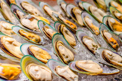 New Zealand green-lipped mussel Stock Images