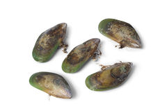 New Zealand green lipped mussels Stock Photos