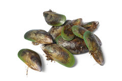 New Zealand green lipped mussels Royalty Free Stock Photography