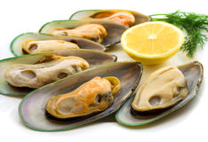 New Zealand green mussels royalty free stock photo