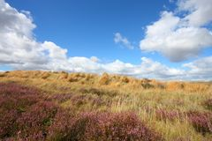 New Zealand heath Royalty Free Stock Image