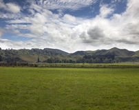 New Zealand - hills and meadows Stock Image