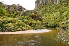New Zealand Jungle Stock Photos
