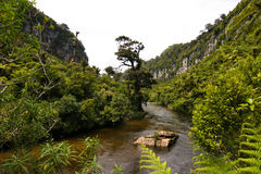 New Zealand Jungle Porarari River Royalty Free Stock Photos