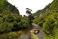 New Zealand Jungle Porarari River. Jungle close to Pancake rocks. Porarari River Royalty Free Stock Photos