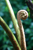 New Zealand Koru royalty free stock images