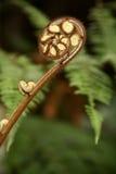 New Zealand Koru Royalty Free Stock Images