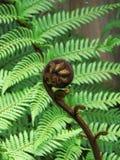 New Zealand Koru stock photo