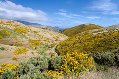 New Zealand landscape. Beautiful New Zealand landscape. Mountains covered by yellow flowers (Gorse - Ulex europaeus). East Harbour Regional Park, Wellington Royalty Free Stock Image