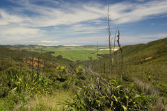 New Zealand Landscape. A New Zealand landscape scene in an area known as the Far North, near Cape Reinga, a popular tourist spot for travellers and holiday Stock Photos