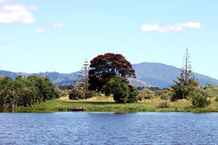 A New Zealand Landscape. Central is New Zealand's Christmas Tree, the Pohutukawa Tree, abloom in red. taken at  Waimanu Lagoon, Waikanae, NZ Royalty Free Stock Images