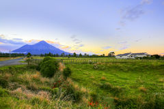 New Zealand landscape with farmland and grazing cows on background volcano Taranaki.  Stock Images