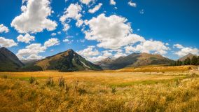 New Zealand landscape with golden grasses in South Island. New Zealand landscape with golden grasses and mountain range on a beautiful summer day at the remote Royalty Free Stock Photos