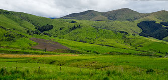 New Zealand landscape of green field Royalty Free Stock Photography