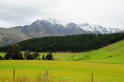 New Zealand landscape. –mountains, meadows and trees Royalty Free Stock Photo